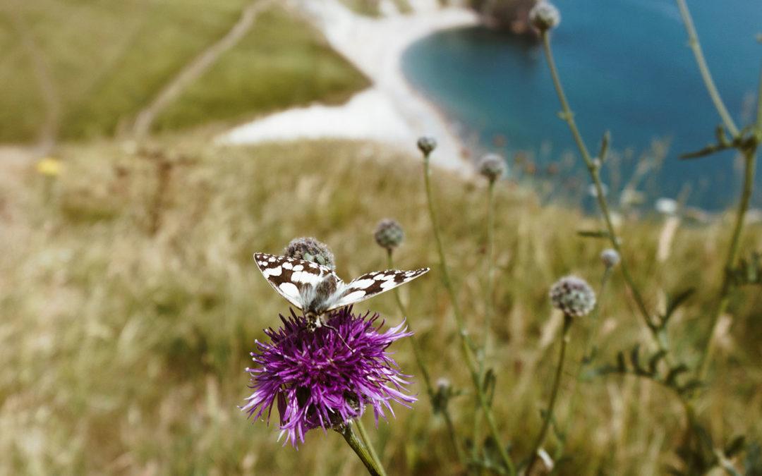 Το πέταγμα της πεταλούδας